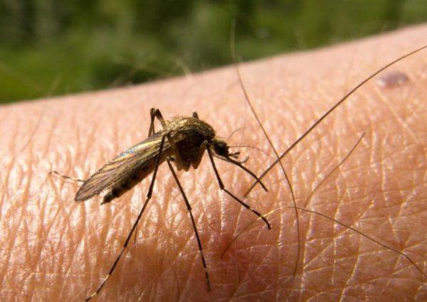 Κουνούπι πάνω σε ανθρώπινο δέρμα